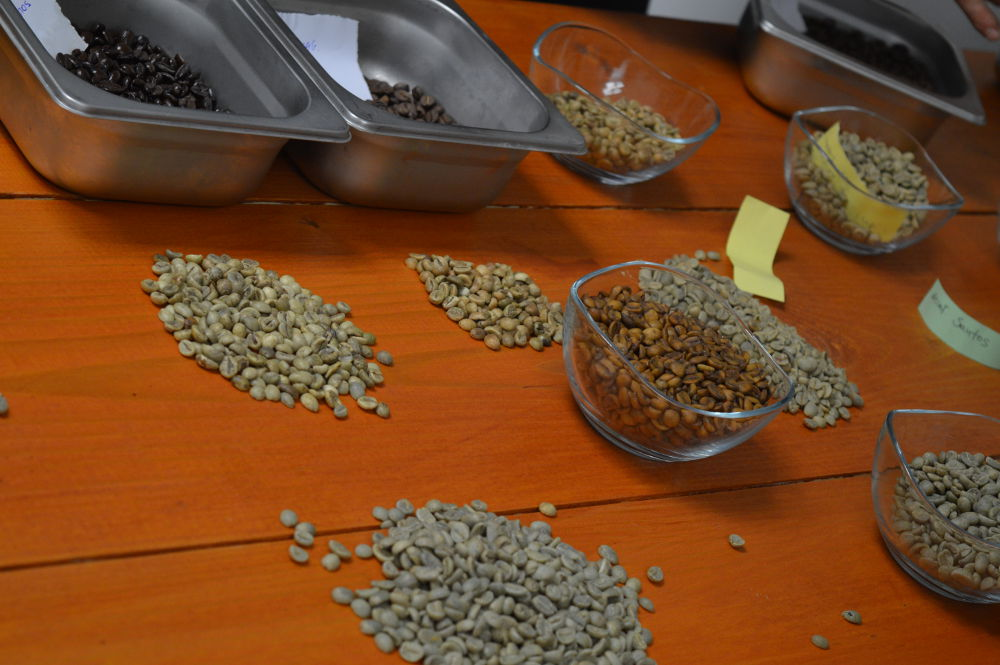 Εισαγωγή στη γευσιγνωσία του καφέ στην Ibi Coffees για τους μαθητές των Datalabs Barista σεμιναρίων